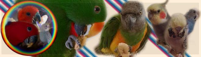 signaturestartfivebirds
