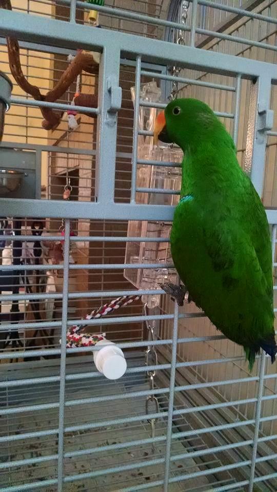 Louie explores his cage.