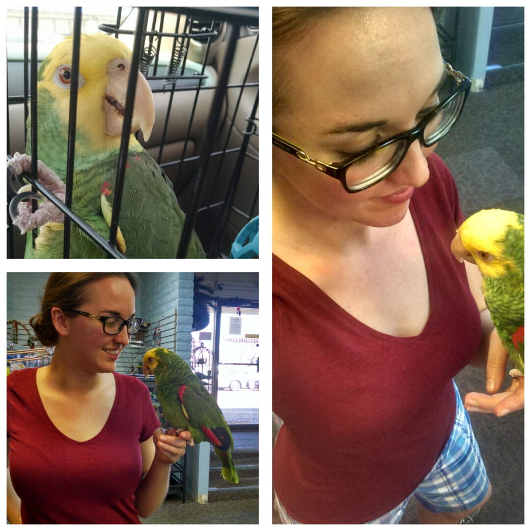 Teaching a Parrot to Step-Up: Recommended Steps