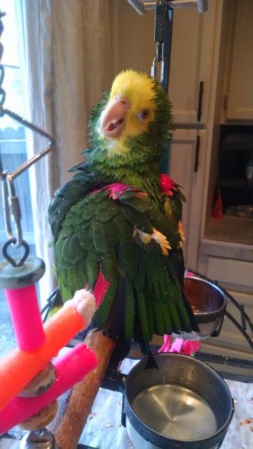 Vi gets a bath!