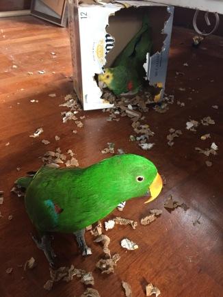 Active birds are healthy birds!