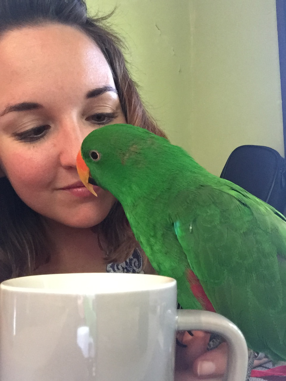 Eclectus Mojo Moults over 5 Years: Improvements in Pictures
